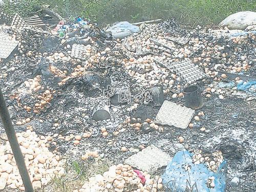 圖為網絡流傳,懷疑雞生病而雞蛋被銷毀的圖,業者澄清是空蛋殼被焚燒,銷毀蛋殼是小農場進行的正常程序。