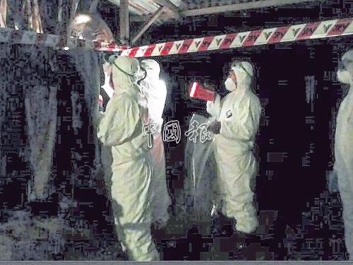 吉蘭丹獸醫局官員展開銷毀及監督行動。
