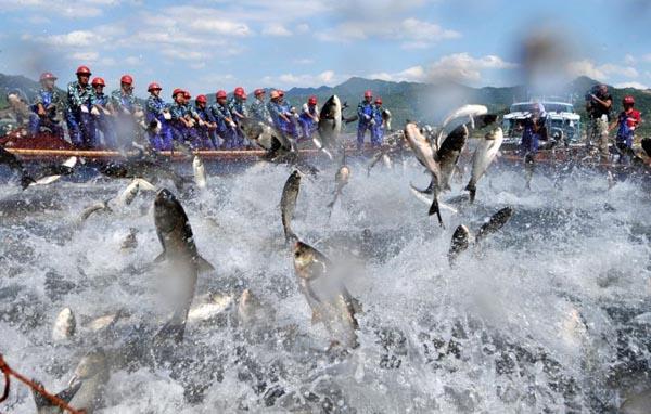 中國千島湖的巨網捕魚何其莊觀。