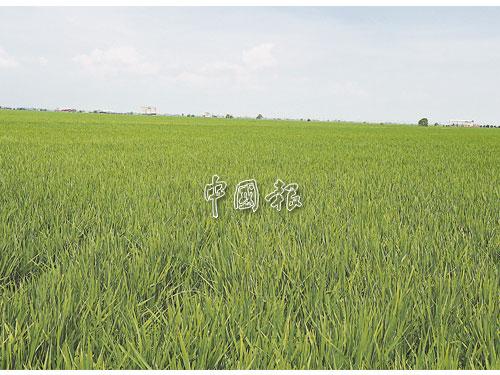 雪蘇丹下月將蒞臨適耕莊,碰巧時逢稻田收割期,殿下將體驗下田收割。