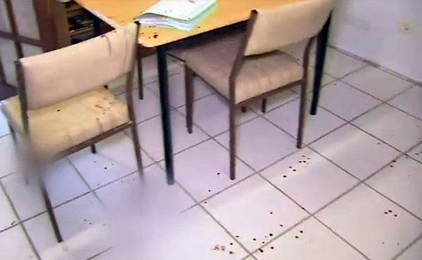 现场血迹斑斑,椅子也沾染血迹。(取自9 News视频)