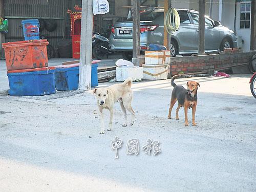 十八丁漁村傳出瘋狗症后,引起村民驚慌,並提高防範意識。