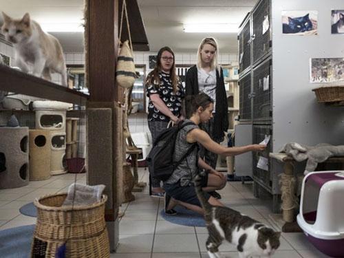每日都有遊客登船探望貓貓。(美聯社)