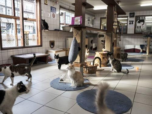 貓住客的活動空間不細小。(美聯社)