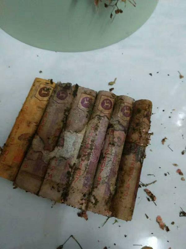 女網友媽媽沒有把520令吉的紙鈔從花盒取出,結果打開一看發現鈔票發霉呈零碎狀。