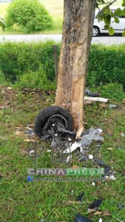 轎車撞樹,樹皮皆被撕破,顯見撞擊力猛烈。