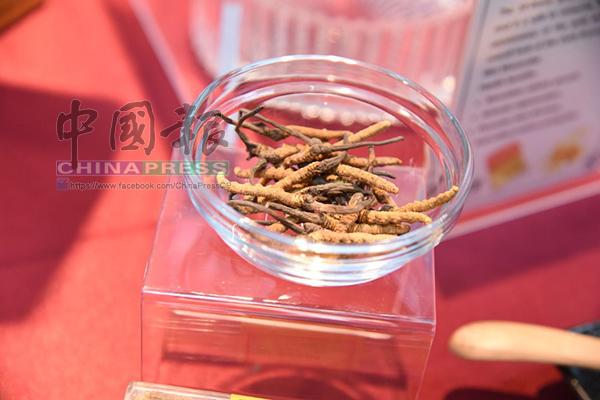全場最貴原材料,上等冬蟲草價如金價,有助提升免疫系統。