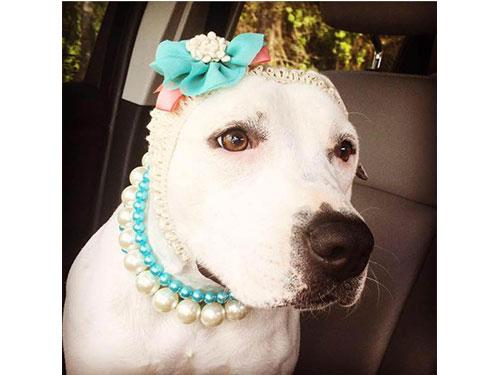 阿比蓋爾當選今年度的英雄狗。(互聯網)