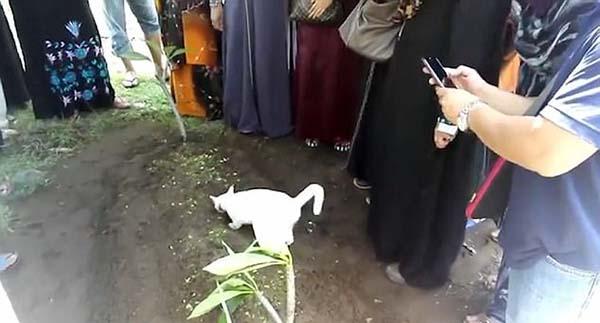 CAT 170921 B4