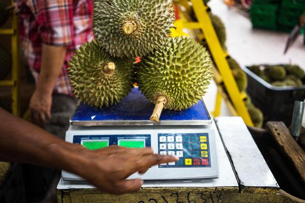 大馬榴槤近年在海外越來越吃香,印證出口商機的潛能無限大。