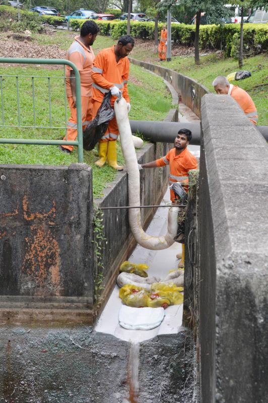 約5名清潔工爬下溝渠,進行清理工作。