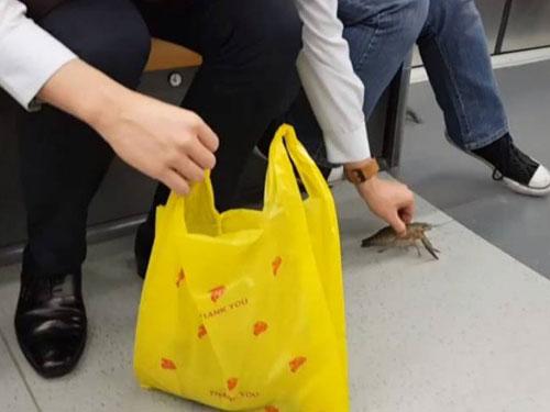 男子忙著將跳出袋子的活蝦抓住放回袋子。(視頻截圖)