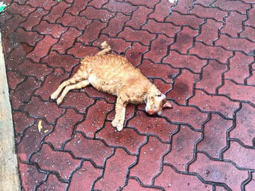 公眾發現小貓一動不動躺在泊車場,左眼掉出。