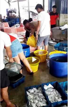 多名員工在漁寮分類漁獲。