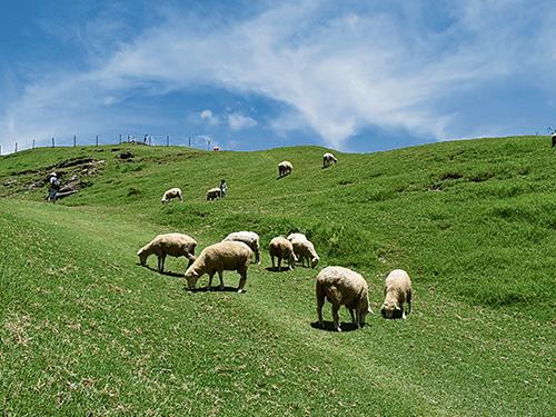 上有白雲,下有宛如白雲下凡人間的綿羊。