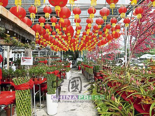 花圃業者高掛紅彤彤燈籠,增添不少新年氣氛。