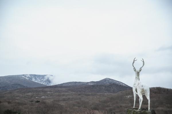 小白鹿是在默默守著休眠火山嗎?