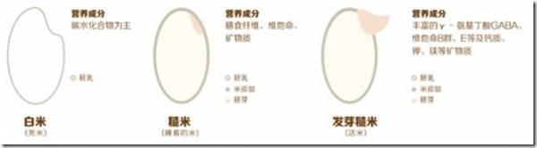 白米VS 糙米VS發芽糙米。
