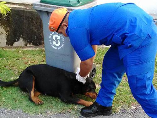 莫末蘇菲亞慢慢靠近狗兒,花半小時把狗兒帶離友族住家。