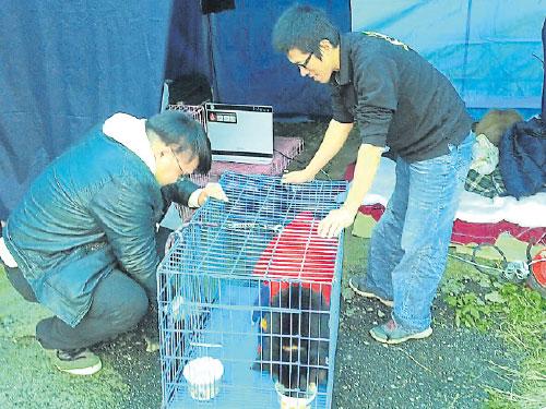 猫狗临时庇护所在灾区附近设帐篷,等候主人来认领。