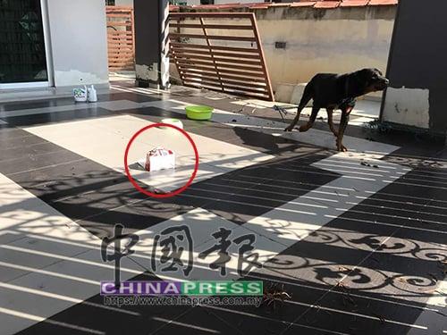 僱主飼養的名犬仍留在庭院,地上則留有週日(11日)下午,有人前來餵狗吃炸雞的盒子。