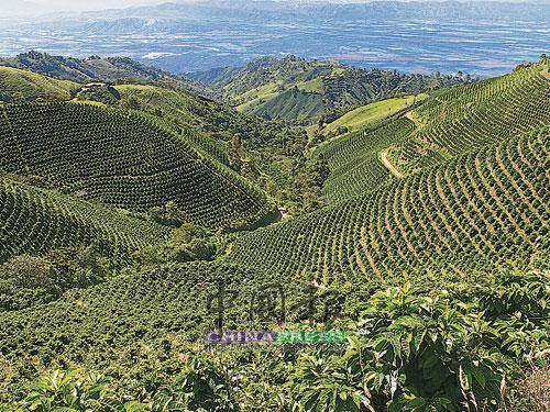 不同的土壤、陽光、氣候等元素,都會影響咖啡豆的種植。
