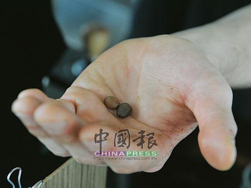 咖啡豆,是一杯好咖啡的決定性因素。