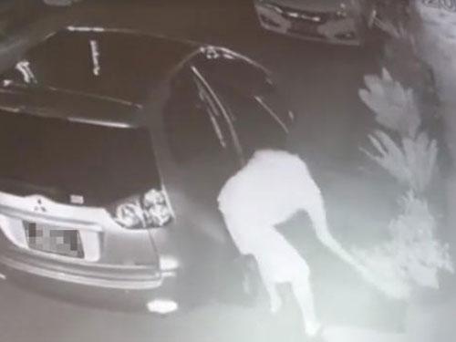 男子開新加坡汽車到新山偷花,以為神不知鬼不覺,沒想到全程遭電眼拍下。(視頻截圖)
