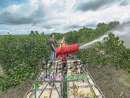 這一片果實累累的菠蘿蜜園,從硬土變成沃土,歸功于農人鍥而不捨的努力。