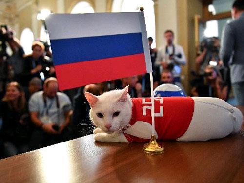 """首日""""上班""""的世界杯官方""""預測官""""貓咪阿喀琉斯,""""欽點""""了東道主俄羅斯將在序幕戰擊敗沙地阿拉伯。(路透社)"""