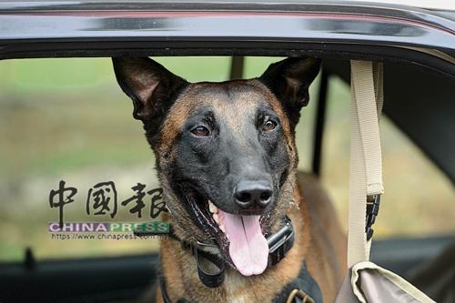 解除任務以后,我是只乖乖坐車的狗狗。