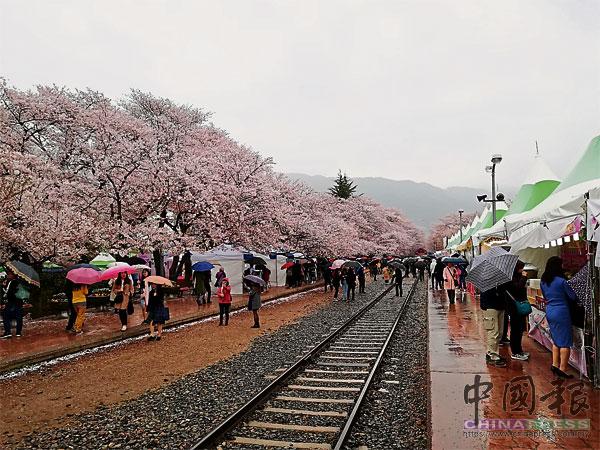 慶和站鐵道旁種滿櫻花樹,一旁的帳篷內,小販在這裡售賣熱騰騰的食物。
