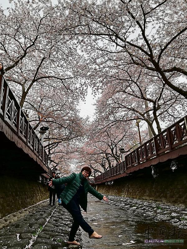余佐川上櫻花盛開,小溪道水清澈,游客都愛在這里取景。