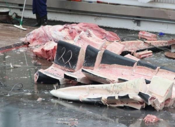 藍鯨被冰島捕鯨公司獵捕,慘變肉塊待售。