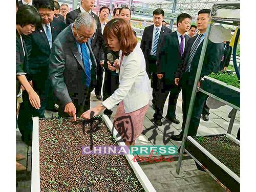 馬哈迪(左3)參觀農業科技創新園的葉菜植物工廠時,細心聆聽解說人員講解中國農業改革創新技術。