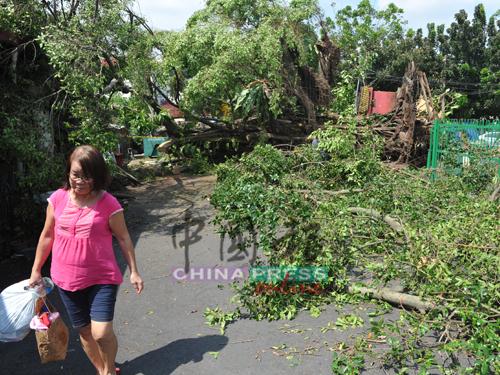 屋前的樹木被吹倒後,等待消拯局和吉隆坡市政局人員前來清理。