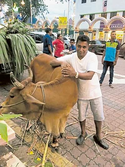 因宗教關係,牛被興都教徒視為神聖的動物。