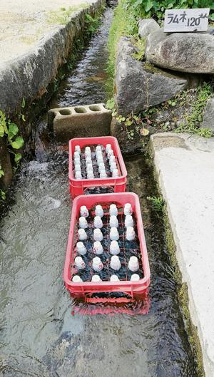 """日本東北的""""longkang""""水也特別清澈和冰涼,還可以拿來冷凍汽水呢!真叫我大開眼界。"""