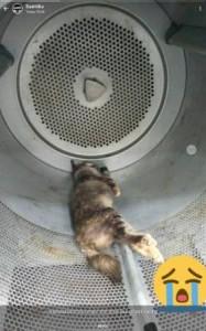 遭烘死的貓,被人發現在烘衣機內。