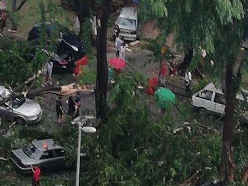 大城堡某處發生樹倒壓中多輛車的事件。(取自網絡)