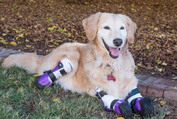 生命力强韧的琪琪,获选为美国英雄犬。