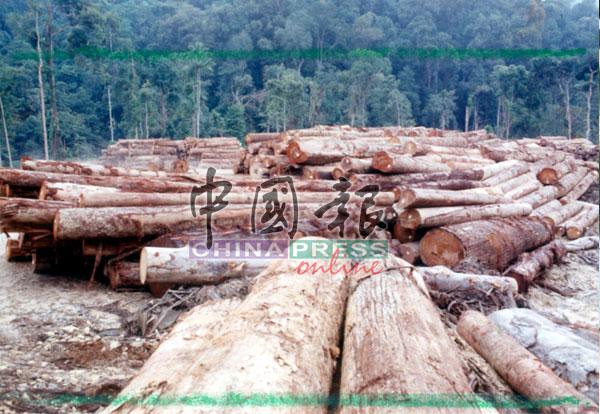 """""""怕驶""""行动严重影响了全国伐木业的运作,每天至少有90%的树桐没人载送而受困山上。"""