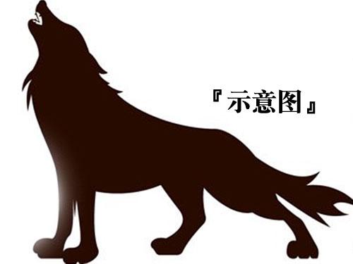 20181024pfb36c-wolf