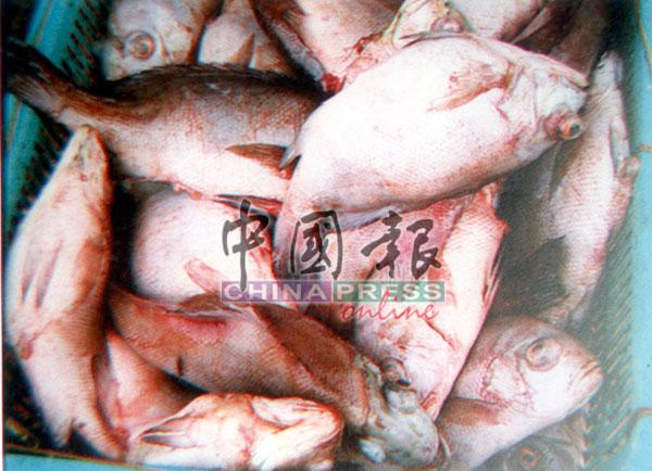 氰化钾在海水涨潮时流向附近海域,造成3个养鱼场饲养的几千只鱼被毒死翻肚浮上海面,使业主蒙受巨额损失。