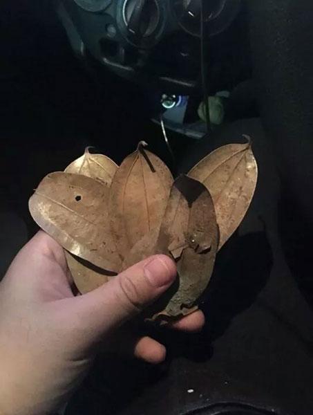 Grab司机打开钱包检查时,发现8令吉竟变成8片树叶。