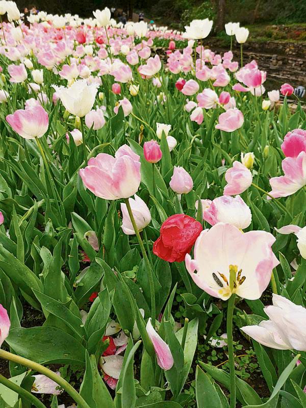 各色花朵,让人心花怒放。