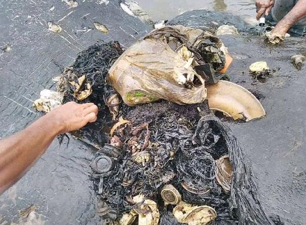 从抹香鲸体内取出的废物,竟有5.9公斤之重。
