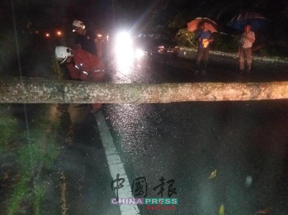 倒树横跨马路,消拯员凌晨受召到场锯树。