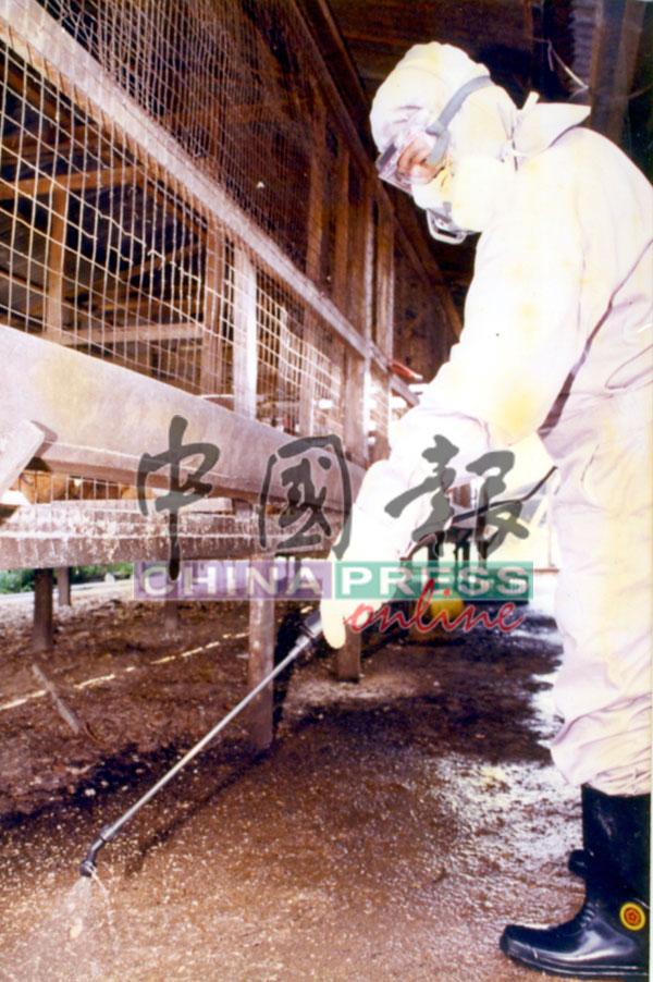 当局确保饲养家禽的场所不受感染,进行清理工作。