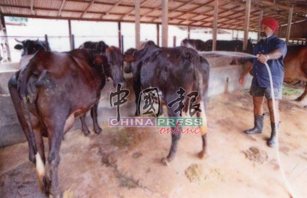 养马只的员工也打理马场环境,以免受污染。